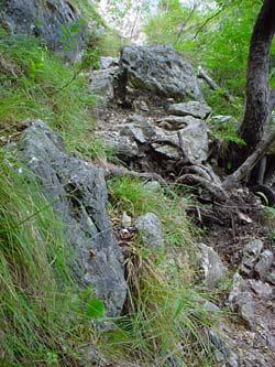 Ein felsiger Bergwanderweg an einem steilen Abhang am Gardasee. Zwischen den Felsen wächst Gras und einige seltene Gebirgsblumen. Ein knorriger Baum krallt sich am Abhang fest und seine Wurzeln lungern über den Wanderpfad.