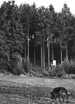Auf einer Wiese am Rande eines Fichtenwaldes streunt und schnüffelt ein Schäferhund. Zwischen den Bäumen, im Hintergrund ist ein Hochsitz aufgestellt.