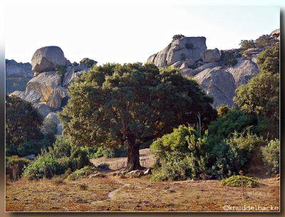 Ein prächtiger Baum steht zwischen Dornenbüschen auf einer trockenen Wiese. Dahinter türmen sich große Felsbrocken auf.